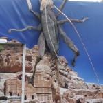 Driftwood Weta