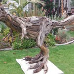 Driftwood Raptor